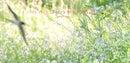 林木林のホームページ