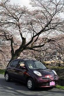 $MARCHに恋焦がれ。-桜とマーチと私