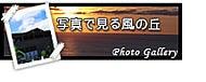 沖縄の宿 ちっちゃなお宿 風の丘ブログ-風の丘フォトギャラリー