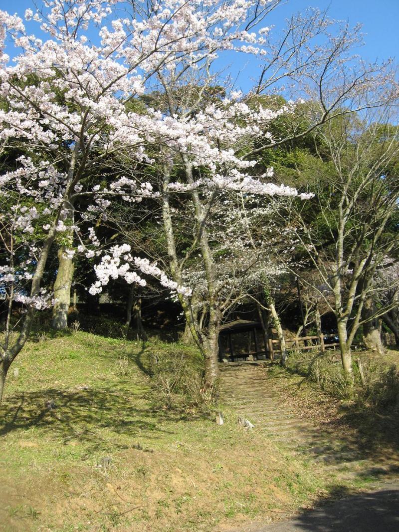 『行方市の桜の絶景スポットを巡る旅』 さくら満開のなめがた ...