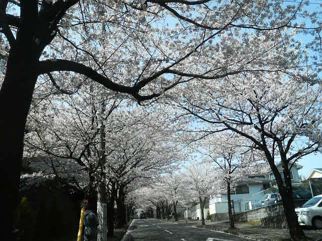 ヴェルディLIFE/東京ヴェルディ営業部で働くスタッフのブログ