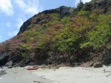小笠原エコツアー 父島エコツアー         小笠原の旅情報と小笠原の自然を紹介します-モモタマナ