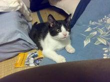 猫とわたし-20081112.jpg