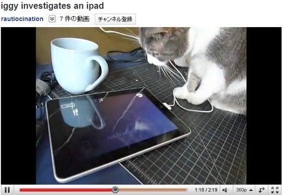 iPad 猫 かわいい