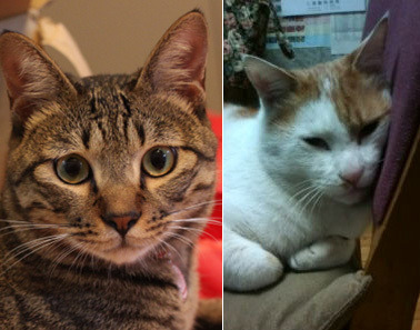 クレイアートでつくる猫 nekonoのブログ-キジトラと和柄猫