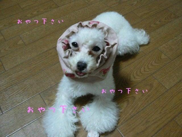 キキのブログ