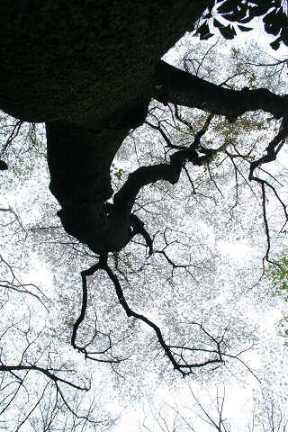 ひより軒・恋愛茶漬け-yamazakura2010