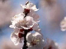 $かっちゃんの日記-野毛山の花