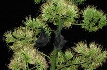 小笠原エコツアー 父島エコツアー         小笠原の旅情報と小笠原の自然を紹介します-コウモリ