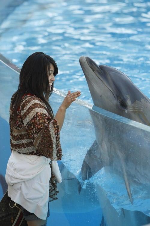 海獣いるか・おるか-イルカ
