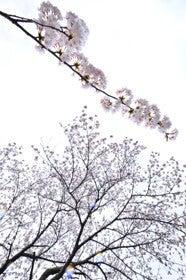 $写真家 谷角 靖オフィシャルブログ「オーロラの降る街 -谷角劇場-」Powered by Ameba-3830