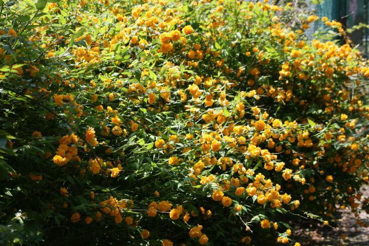 ブレッド&サーカス・ブログAbsolutely Delicious!-flower