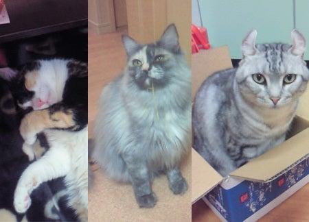クレイアートでつくる猫 nekonoのブログ-3匹のモデル猫ちゃん