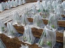 早期リタイア生活(準備編)-plastic bag