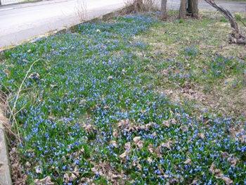 北欧からコンニチワ-春=1