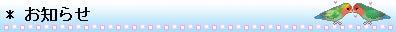 小桜5羽 ときどき アクア