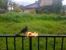 おまけ道@琵琶湖畔で実家生活♪-??.jpg