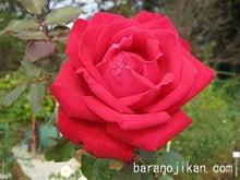 薔薇王子のブログ  ~愛しの薔薇~