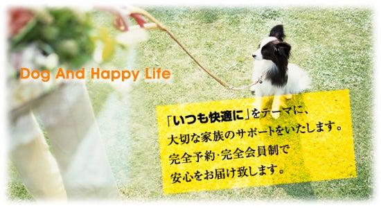 幸せハートの家政婦猫ぷくちゃん-100429