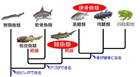 川崎悟司 オフィシャルブログ 古世界の住人 Powered by Ameba-棘魚類の系統的位置