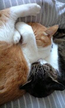 ずれずれブログ…湘南で猫と暮らせば…-100430_1525~0001.jpg
