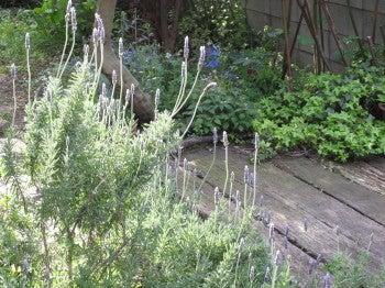 $Day dreamer's trail-herb