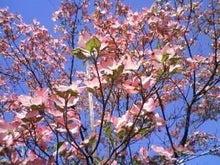 手当たり次第の本棚-花水木(ピンク)