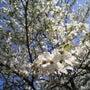 『花水木』