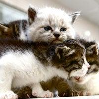 ソーシャルアパートメント住民のブログ-子猫