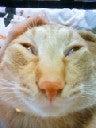 猫がやってきた!!-NEC_0232.jpg