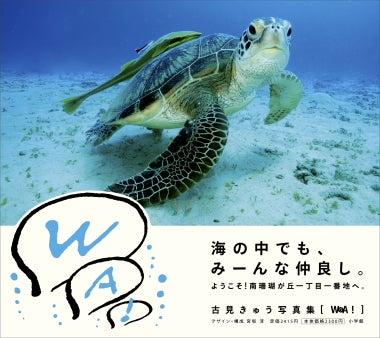 世界の海を旅する水中写真家 古見きゅうのブログPowered by Ameba