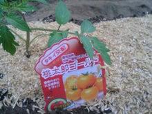 やはり菜園かな?-我が家の定番トマト