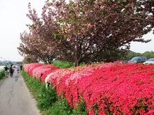 シニアランナーのランニング日記-新川サイクリングロード