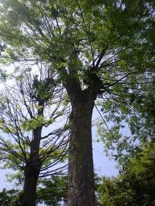 夫婦世界旅行-妻編-境内の木々