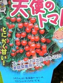 日々 更に駆け引き-天使のトマト ラベル