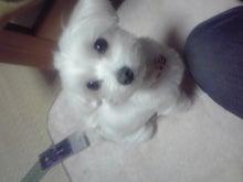 リコとくらまの番犬生活♪-KC3I0009.jpg