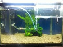 熱帯魚に癒される日々-SH3G0073.jpg