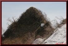 ロフトで綴る山と山スキー-0508_1334