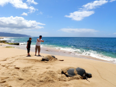 $楽園ハワイ通信 by Lani Tours-ウミガメのお昼寝