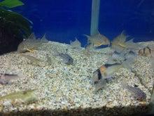 熱帯魚に癒される日々-SH3G0016.jpg