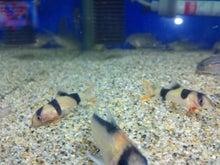 熱帯魚に癒される日々-SH3G0020.jpg