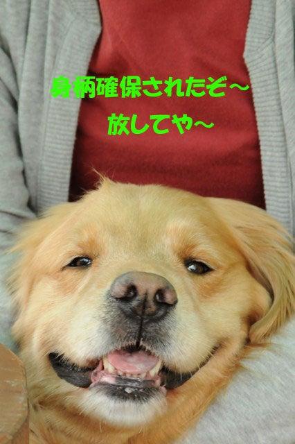 わん's日和