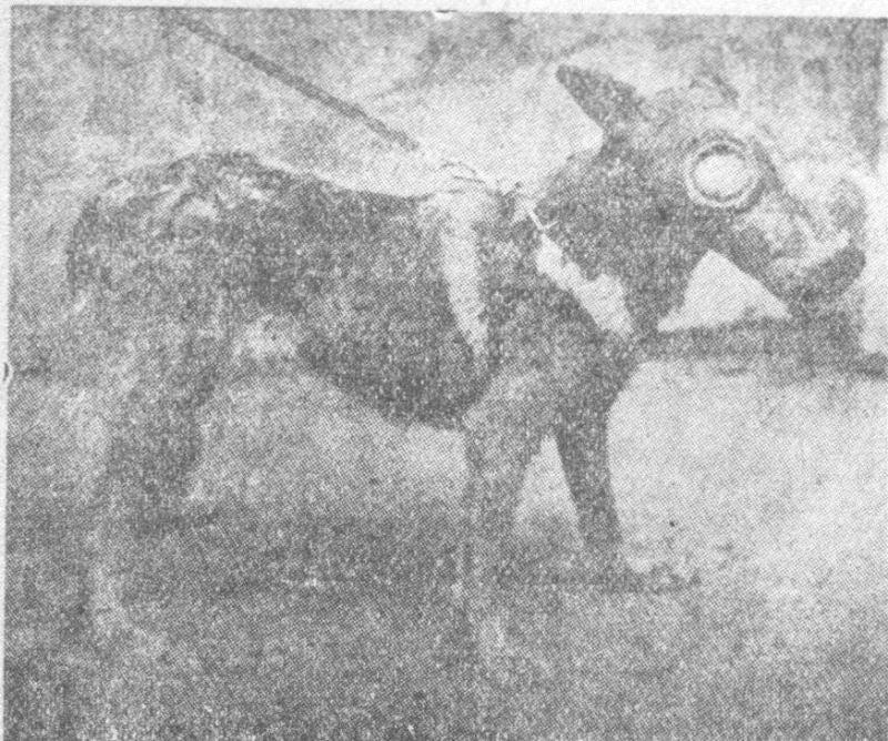 犬用ガスマスク