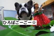 ☆モッシュピット☆GO☆GO☆