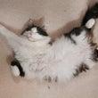猫とベジタリアンとL…