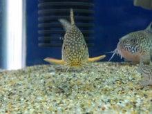 熱帯魚に癒される日々-SH3G00660001.jpg