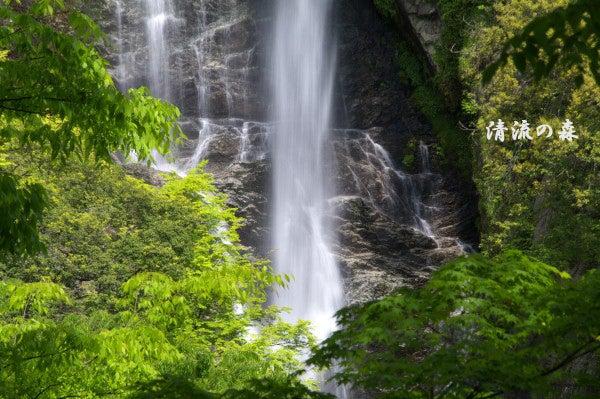 $清流の森 ~九州の滝と風景~-未設定