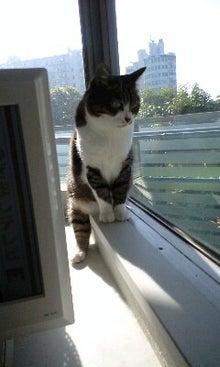 ずれずれブログ…湘南で猫と暮らせば…-100521_0707~0001.jpg