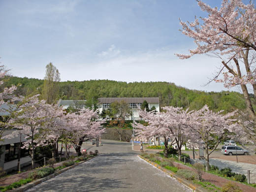 世界一蹴の旅-桜