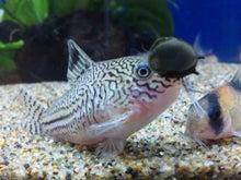 熱帯魚に癒される日々-SH3G00590001.jpg